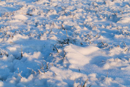 snow photographed in the winter season, which appeared after a snowfall. close-up, Фото со стока