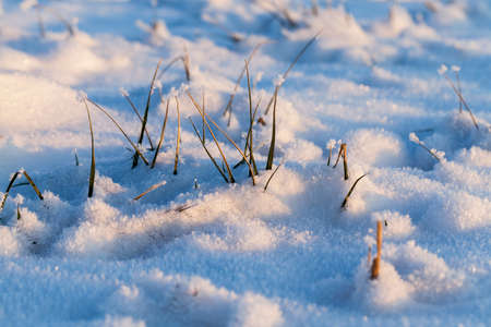 snow photographed in the winter season, which appeared after a snowfall. close-up, 版權商用圖片