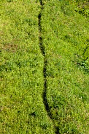 mowed green grass on which people walk, summer season