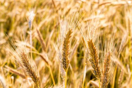 field food 免版税图像