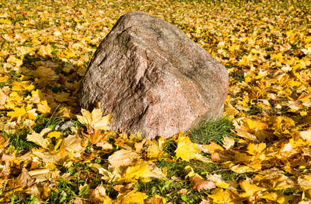 a large stone lies on the yellowed maple leaves that have fallen on the green grass in the autumn season, close-up in nature on a sunny day in early autumn in September or October