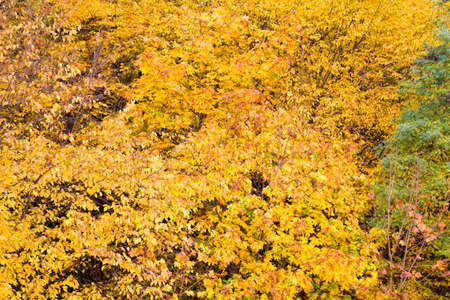 abstract background of different autumn yellowed foliage in the forest, beautiful real nature in the deciduous forest Stock fotó