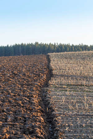 plowed agricultural field in which agricultural activities are carried out to obtain a new crop of cereals, arable land on stubble