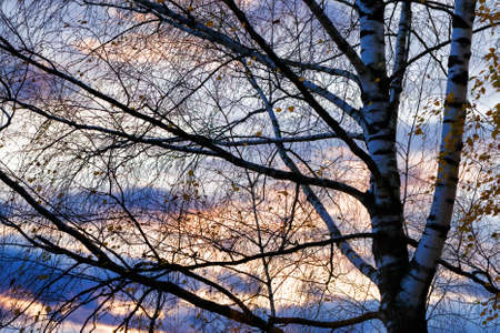 the multi-colored sky and branches of trees during a sunset or sunrise the sun