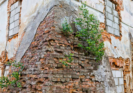partially destroyed old brick wall, made of red clay bricks, parts of the building between the bricks which grew plants including trees