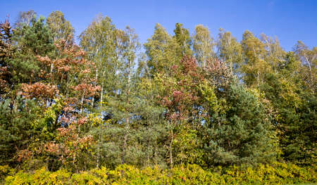 different kinds of deciduous trees with changed color foliage in autumn, Sunny weather in autumn