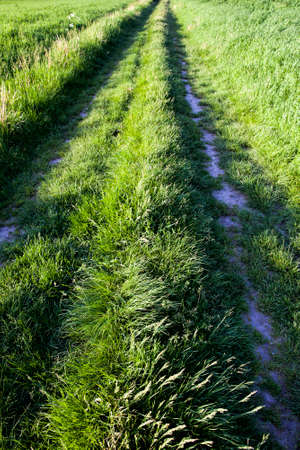 two to leave ruts in the grass and sand in a rural area, improvisation of the road