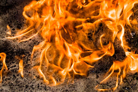 burning felled trees and logs in the flames of the fire, details of the burned part of natural materials Stok Fotoğraf