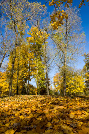 autumn landscape, foliage on the ground in early autumn, beautiful nature in leaf fall in nature, deciduous forest with mixed tree species