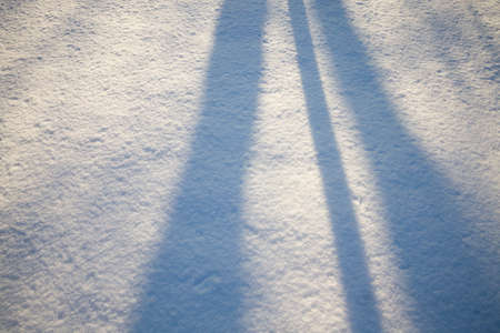 shadows from forest trees on white snow surface in winter, nature during cold and frost, Sunny weather and shadows on wavy snowdrifts Stok Fotoğraf
