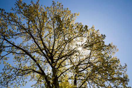 real different kinds of trees in sunlight in summer or spring time