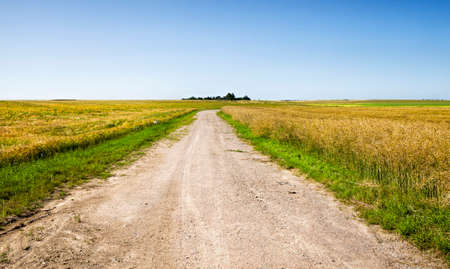 the traveled part of the field resulting in an unpaved road