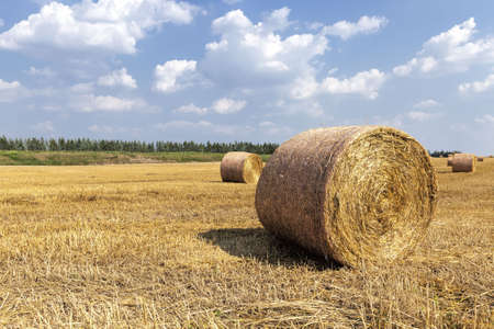 a stack of straw 版權商用圖片