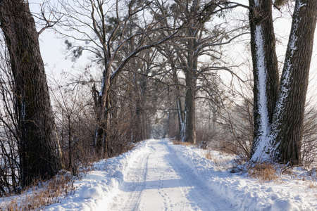 narrow snow-covered winter road