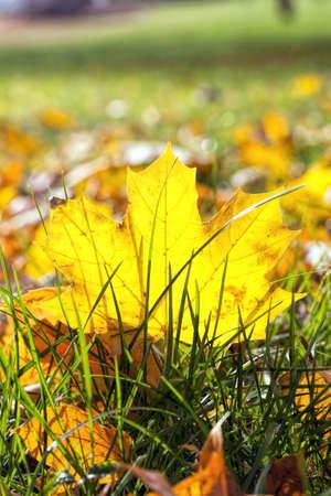 autumn the leaves fall