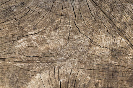the structure of the cracked wood of the tree trunk, the background is made of natural materials, the wood material has an uneven structure and many cracks