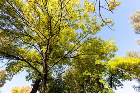 deciduous trees in the autumn season 스톡 콘텐츠