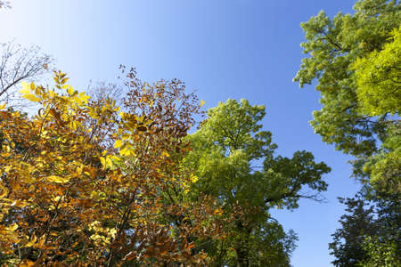 colorful deciduous trees in the forest autumn