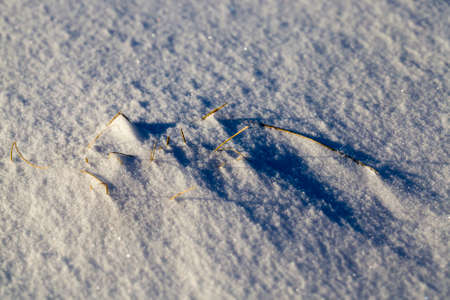 snow cold drifts from which grass sticks out, frosts and snowfalls in nature