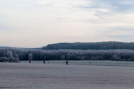 Winter landscape at dusk agricultural field with a forest and electric poles with wires. Standard-Bild