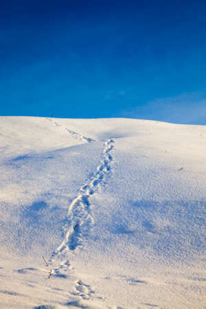 traces of people on the snow, details on the nature after human participation