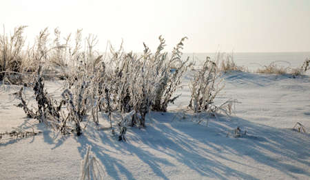 snow and ice covered dead grass in winter season, beautiful nature and specific features of winter weather in the wild Standard-Bild