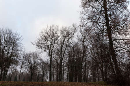 photographed dark forest in the autumn season. Bare trees in cloudy weather Standard-Bild