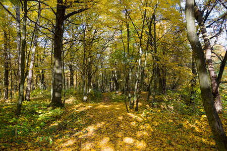 forest growing on hilly terrain during the autumn time of the year, lit by the rays of the sun in early autumn and mid-autumn