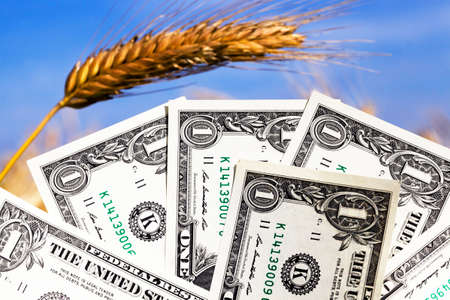 one American dollar pile folded in the shape of a fan on the background of a blue sunny sky and ears of wheat, close-up in nature, the concept of agricultural business