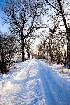 deciduous trees growing along the road, traces of mechanical transport on cold snow after snowfall, details of the structure and traces of the tread of cars,