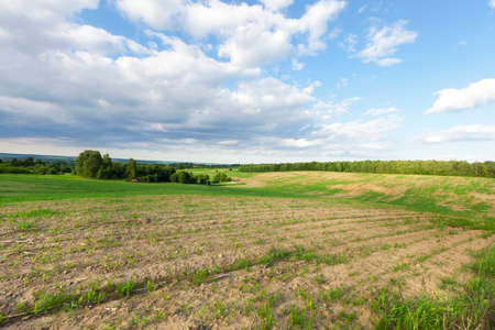 agricultural field on which the preparation of haylage for the preparation of feed for the winter time, summer time landscape