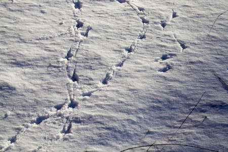 clean snow with traces of people passing through it, winter time in the cold season Standard-Bild