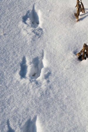 clean snow with traces of an animal dog, winter time in the cold season Standard-Bild