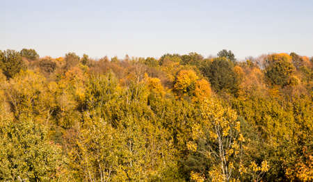 young forest with deciduous trees in the autumn season, a landscape of beautiful real nature