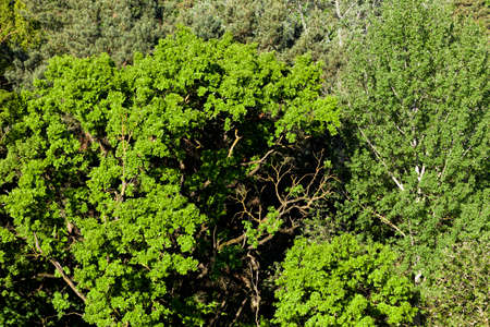 trees and plants in Sunny bright weather, summer or spring in the Park or in the forest solid background of trees of different species