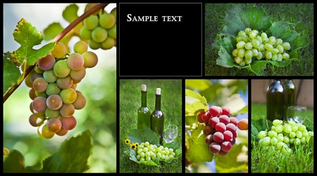 Wine. Beautiful Grapes Collage  Stock Photo