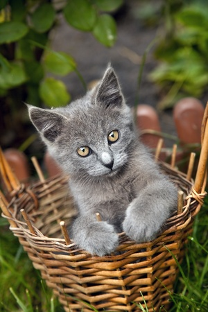 Small funny kitten sitting in a basket in summer day photo