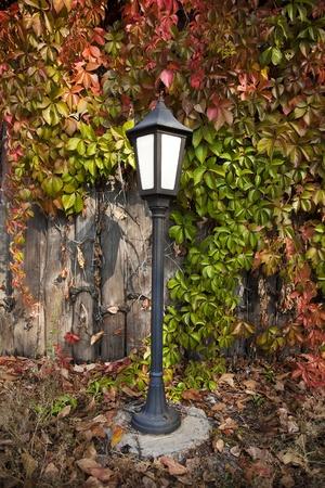 Street lantern on autumn foliage background