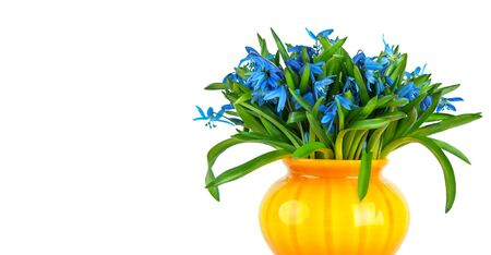 blue snowdrops flowers in yellow vase isolated on white  photo