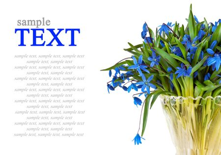 blue snowdrops flowers in vase isolated on white