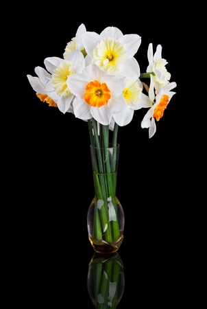 bouquet from beautiful white narcissus in vase isolated on black background
