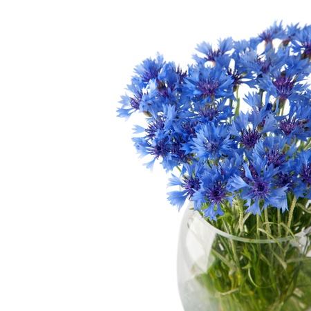 Cornflower flowers bouquet isolated on white background