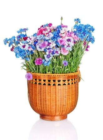 wooden basket with beautiful cornflowers isolated on white background photo