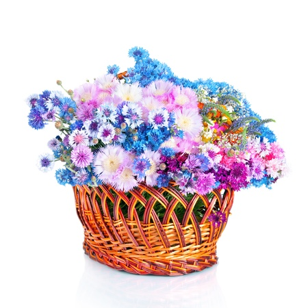 Bouquet of many beautiful multi-colored cornflowers flowers  in big basket  isolated on white background photo