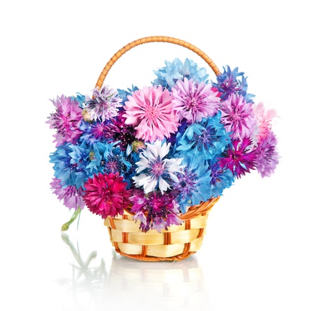 Bouquet of many beautiful multi-colored cornflowers flowers  in basket  isolated on white background photo
