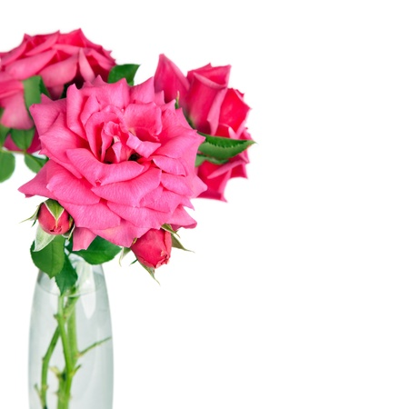 bouquet of pink roses flowers in vase isolated on white background  Stock Photo