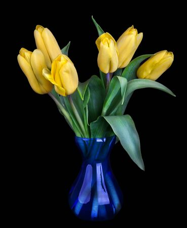 Bouquet of beautiful tulips in blue vase isolated on black background; photo