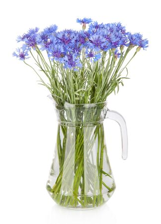 Cornflowers flowers in jug, isolated on white photo