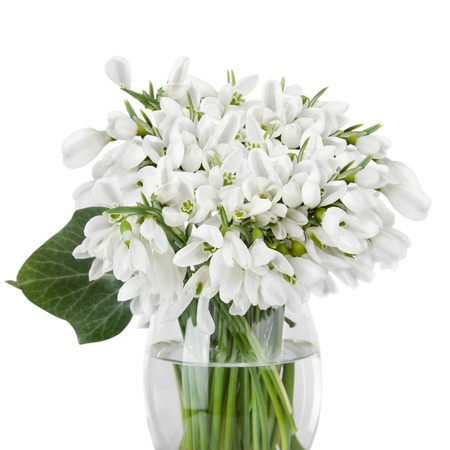 Bouquet of snowdrop flowers in glass vase, isolated on white photo