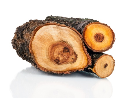 cut logs: Stack of cut logs fire wood from tree. Renewable resource of a energy. Environmental concept. Stock Photo